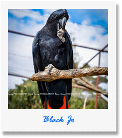 Black Jo - one of our animals at Pauls Place Wildlife Sanctuary / Park - Kangaroo Island