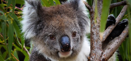 Donate - Paul's Place Wildlife Sanctuary / Park - Kangaroo Island