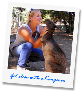 Get close with a Kangaroo at our Wildlife Tour - Kangaroo Island