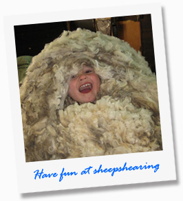 Have fun at sheepshearing at our tour - Paul's Place Wildlife Sanctuary - Kangaroo Island