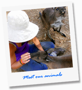 Meet our Animals at our tour - Paul's Place Wildlife Sanctuary - Kangaroo Island