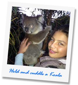 Hold-a-koala