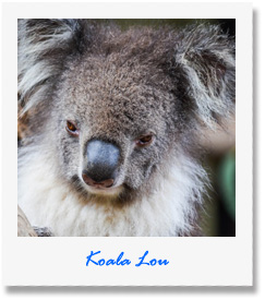 Lou - one of our animals at Pauls Place Wildlife Sanctuary / Park - Kangaroo Island